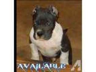 American Pit Bull Terrier Puppy for sale in MONTEVALLO, AL, USA