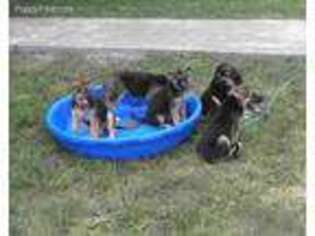 Puppyfinder com: Puppies puppies for sale near me in 32951