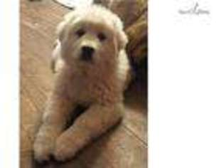 View Ad Great Pyrenees Puppy For Sale Washington Spokane Usa