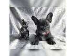 Puppyfindercom Puppies For Sale And Dogs For Adoption Near