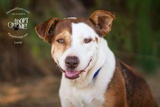 Mutt Dog For Adoption in Scottsdale, AZ, USA