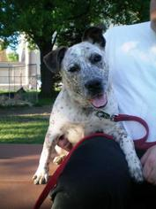 Mutt Dog For Adoption in Northbrook, IL, USA