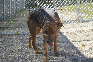 Mutt Dog For Adoption in Vienna, OH, USA