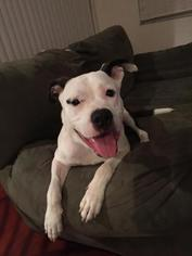 Mutt Dog For Adoption in Sanford, FL