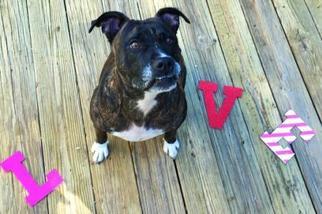 Mutt Dog For Adoption in Sanford, FL, USA
