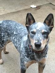 Mutt Dog For Adoption in Remus, MI