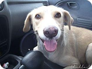 Mutt Dog For Adoption in Whitestone, NY, USA