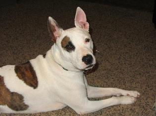 Mutt Dog For Adoption in Ponca City, OK, USA