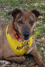 Australian Shepherd Dog For Adoption in Lago Vista, TX, USA