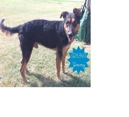 Mutt Dog For Adoption in Von Ormy, TX, USA