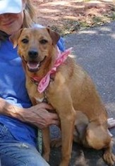 Mutt Dog For Adoption in Greenville, SC, USA