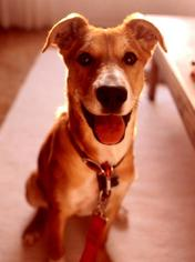 Mutt Dog For Adoption in Rancho Santa Margarita, CA, USA