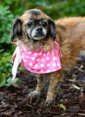 Mutt Dog For Adoption in San Pedro, CA, USA