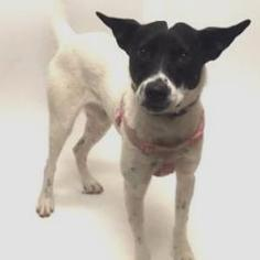 Mutt Dog For Adoption in Show Low, AZ
