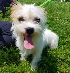 View Ad Shih Tzu Mix Dog For Adoption Kentucky Florence Usa