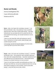 Bulloxer Dog For Adoption in Brentwood, TN
