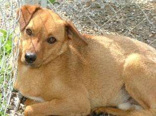 Mutt Dog For Adoption in Savannah, MO, USA