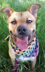 Mutt Dog For Adoption in Austin, TX