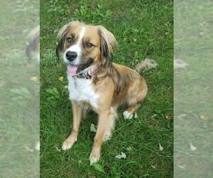 Border Collie-Unknown Mix Dogs for adoption in Livonia, MI, USA
