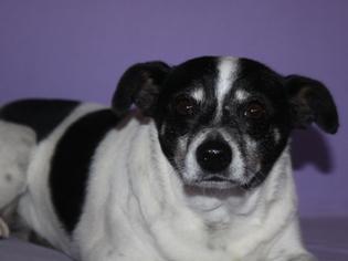 Mutt Dog For Adoption in Phelan, CA, USA