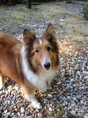 Mutt Dog For Adoption in Dawsonville, GA