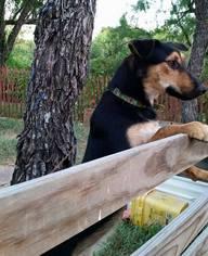 Mutt Dog For Adoption in Bertram, TX, USA