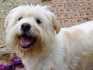 Mutt Dog For Adoption in Pacolet, SC, USA
