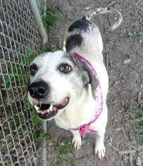 Mutt Dog For Adoption in Terre Haute, IN