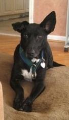 Mutt Dog For Adoption in Rockaway, NJ, USA