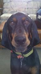 Mutt Dog For Adoption in Berwick, PA
