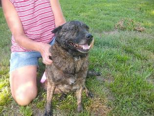 Mutt Dog For Adoption in Rayville, LA, USA