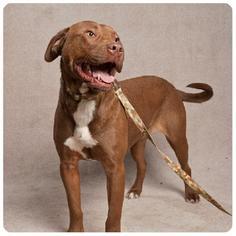 Mutt Dog For Adoption in Stone Mountain, GA, USA