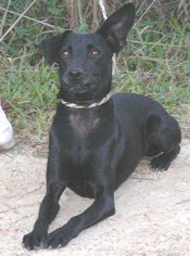 German Shepherd Dog Mix Dog For Adoption in Slidell, LA, USA