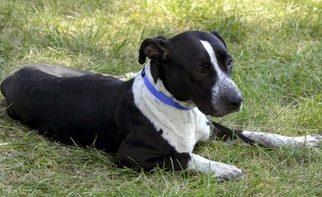 Pointer Mix Dog For Adoption in Lorain, OH, USA