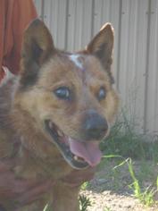 Mutt Dog For Adoption in Aurora, CO