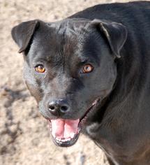Mutt Dog For Adoption in Garner, NC, USA
