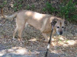 Mutt Dog For Adoption in La Honda, CA