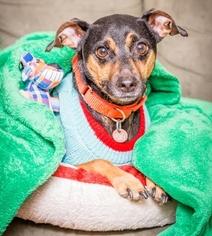 Mutt Dog For Adoption in Fargo, ND