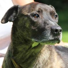 Mutt Dog For Adoption in Lovingston, VA, USA
