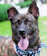 Mutt Dog For Adoption in San Francisco, CA, USA