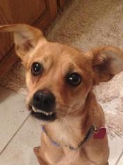 Mutt Dog For Adoption in Tomball, TX, USA
