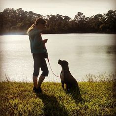 American Pit Bull Terrier-Labrador Retriever Mix Dog For Adoption in Chuluota, FL, USA