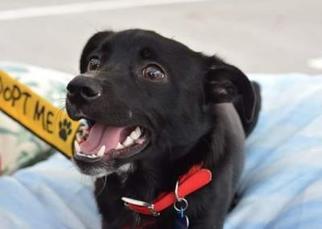 Mutt Dog For Adoption in Matthews, NC, USA
