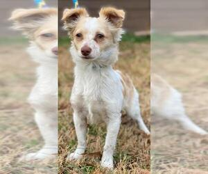 Chion Dogs for adoption in Little Rock, AR, USA
