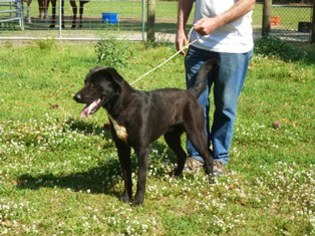 Mutt Dog For Adoption in Slidell, LA
