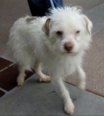 Mutt Dog For Adoption in Porter Ranch, CA, USA