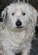 Mutt Dog For Adoption in Savannah, MO