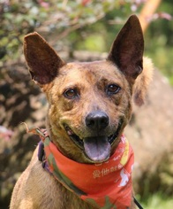 Mutt Dog For Adoption in San Francisco, CA