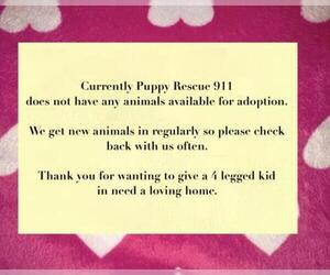 Mutt Dogs for adoption in Chester, IL, USA
