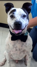 Mutt Dog For Adoption in Thorndale, TX, USA